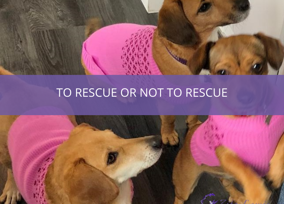 Photography of 3 dogs in pink knitted coats and text overlay that reads To Rescue or Not To Rescue
