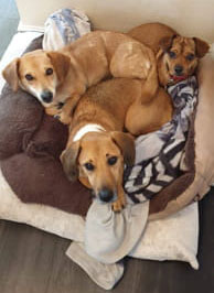 Picture of our rescue dogs